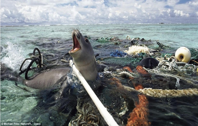 Resultado de imagen de plastico en el mar animales